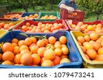 colored fruit boxes full of... | Shutterstock . vector #1079473241
