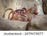 warsaw  poland   october 3 ... | Shutterstock . vector #1079475077
