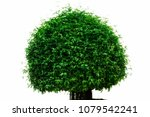 isolated tree on white... | Shutterstock . vector #1079542241