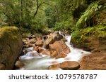 A Creek In Dense Himalayan...