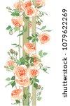 Stock vector garden roses summer flowers in the garden curly rose 1079622269