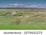 sheeps and lambs on green... | Shutterstock . vector #1079631275