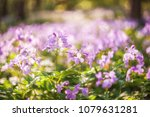 soft spring background with... | Shutterstock . vector #1079631281