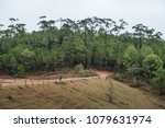 pine forests at ban wat chan... | Shutterstock . vector #1079631974