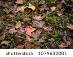 in fall  maple leaves on the... | Shutterstock . vector #1079632001