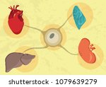 synthetic lab grown human... | Shutterstock .eps vector #1079639279