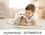 little boy and bichon frise dog ... | Shutterstock . vector #1079689514