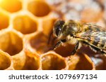 Working Bee In A Honeycomb...