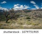 a lone weather beaten tree...   Shutterstock . vector #1079751905