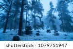 Foggy Mystical Forest In Snow...