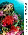 soft coral reef scene | Shutterstock . vector #1079808839