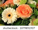 big orange rose and gerber in... | Shutterstock . vector #1079851937
