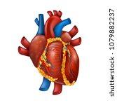 healthy 3d realistic human...   Shutterstock .eps vector #1079882237