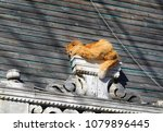 photo of a funny red cat on a... | Shutterstock . vector #1079896445
