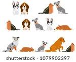 cute dogs border set   Shutterstock .eps vector #1079902397