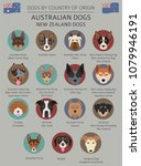dogs by country of origin.... | Shutterstock .eps vector #1079946191