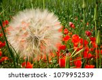 horizontal view of close up of... | Shutterstock . vector #1079952539