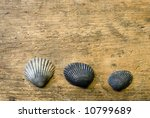 3 shells on driftwood | Shutterstock . vector #10799689
