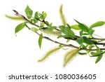 spring april  twigs  with... | Shutterstock . vector #1080036605
