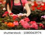 greenhouse worker hands caring... | Shutterstock . vector #1080063974