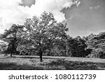 Small photo of Heathland with flowering common heather (Calluna vulgaris) and an oak in the Lueneburg Heath (Lueneburger Heide) in Lower Saxony, Germany. Autumn field and meadow concept. Single tree concept
