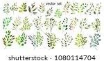 vector illustration. botanical... | Shutterstock .eps vector #1080114704