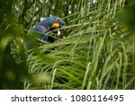 hyacinth macaw on a palm tree...   Shutterstock . vector #1080116495