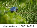 hyacinth macaw on a palm tree...   Shutterstock . vector #1080116519