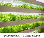 greenhouse plant row grow with... | Shutterstock . vector #1080158345