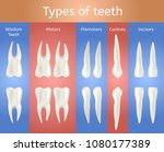 different type of tooth. 3d... | Shutterstock .eps vector #1080177389