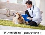 vet doctor examining golden... | Shutterstock . vector #1080190454