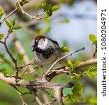 Small photo of A cute baffled sparrow