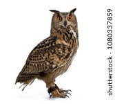 turkmenian eagle owl   bubo... | Shutterstock . vector #1080337859