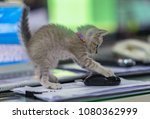 cute kitten playing with a... | Shutterstock . vector #1080362999
