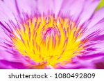 close up of pink water lily... | Shutterstock . vector #1080492809