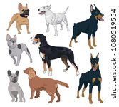 standing dogs collection... | Shutterstock .eps vector #1080519554