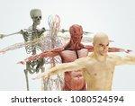 human body system  skin ... | Shutterstock . vector #1080524594