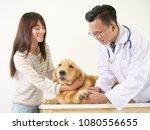 veterinarian checking the dog...   Shutterstock . vector #1080556655