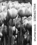 monochrome macro... | Shutterstock . vector #1080607544