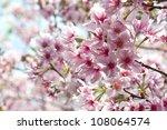 taiwan plant flower cherry... | Shutterstock . vector #108064574
