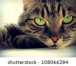 Stock photo portrait of green eyed cat 108066284