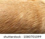 dog fur closeup. red  yellow ... | Shutterstock . vector #1080701099