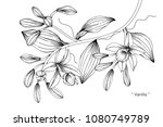 vanilla flower drawing... | Shutterstock .eps vector #1080749789