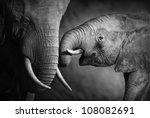 Elephants Showing Affection ...