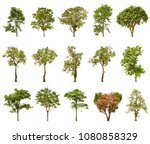 collection of big tree isolated ...   Shutterstock . vector #1080858329