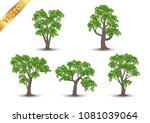 collection  beautiful tree... | Shutterstock .eps vector #1081039064