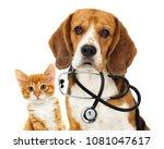 Stock photo dog veterinarian and cat 1081047617
