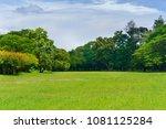 green tree in a beautiful park...   Shutterstock . vector #1081125284