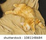 home pets   cats | Shutterstock . vector #1081148684