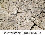 old wood texture  cracks | Shutterstock . vector #1081183235